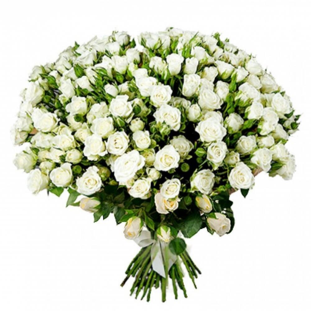 Кустовая белая роза Snowflake