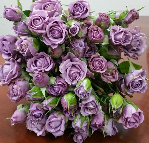 Сиреневая кустовая роза