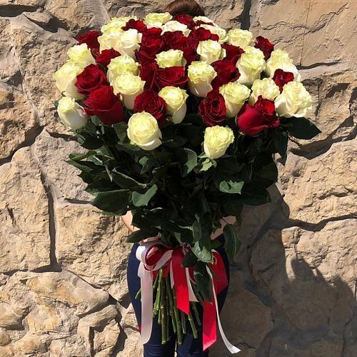51 роза Explorer и Mondial