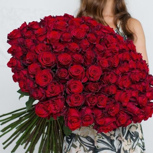 101 красная роза Explorer 60см