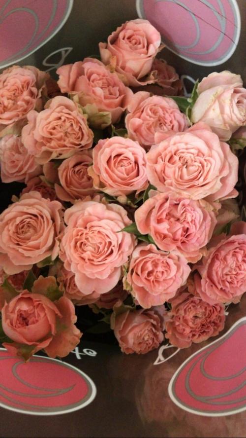 Кустовая роза нежно-коралловая