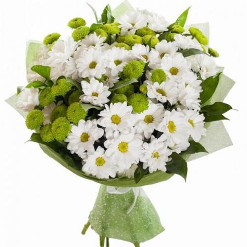 Белая и зеленая хризантема