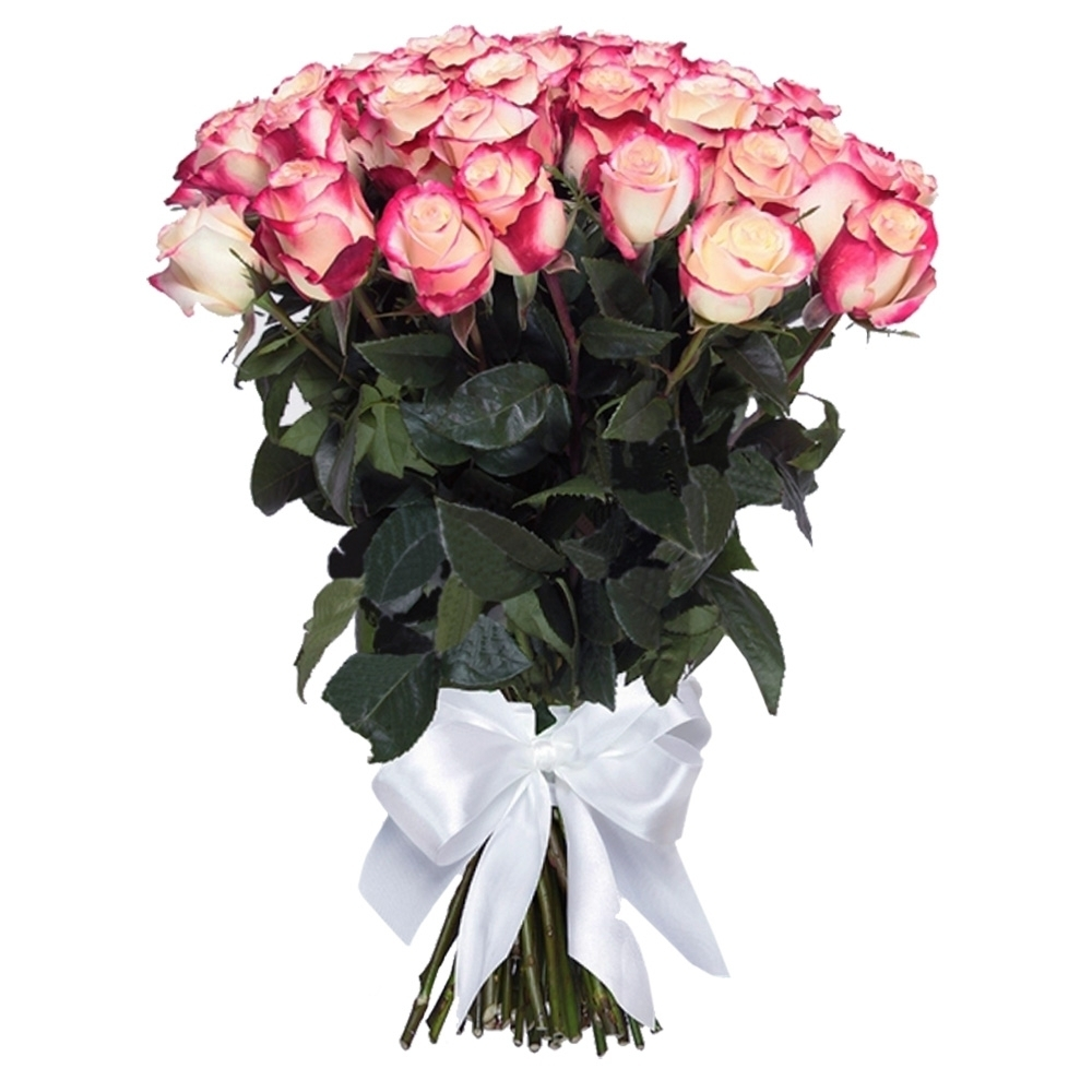 Бело-розовая роза Sweetnes