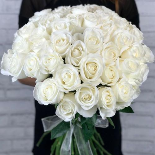 Белоснежная роза Tibet